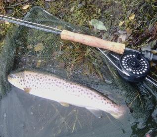 42cm Trout (1)