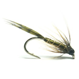 softhackles.blog – Olive Partridge Spider